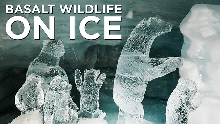 Banner of Wildlife on Ice – February 2021